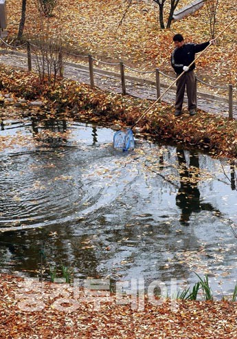 낙엽, 물위에 지다