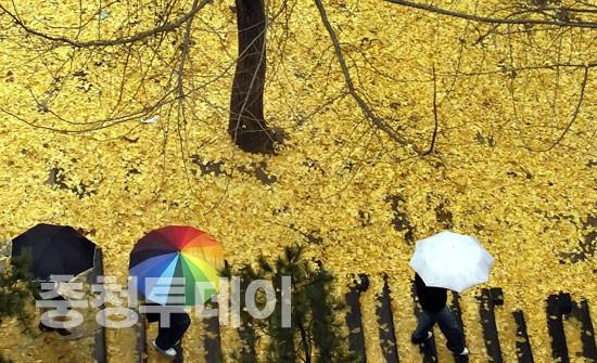 겨울비에 속절없는 은행나뭇잎