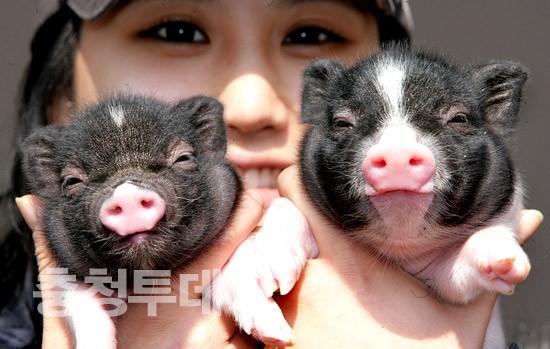 돼지해 복덩이 남매