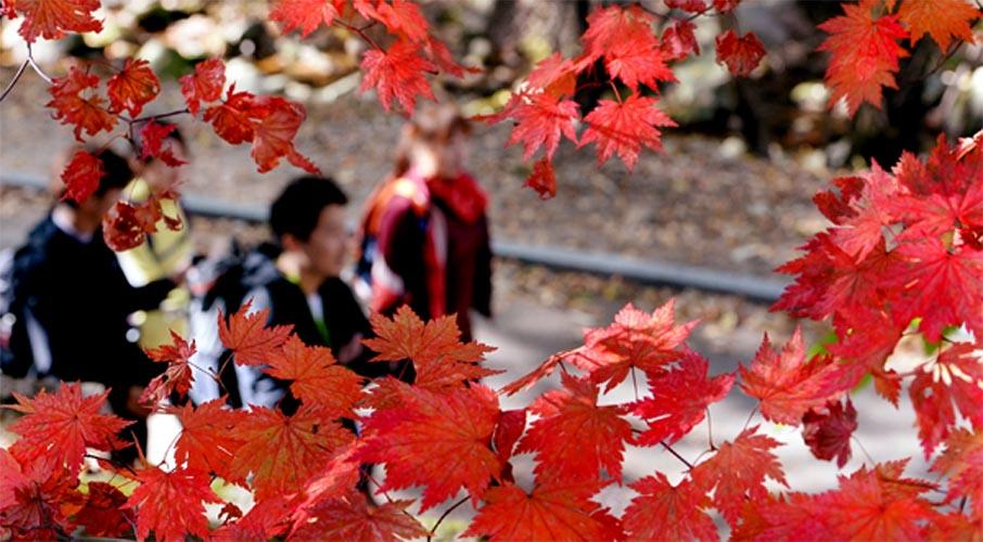 가을의 안간힘