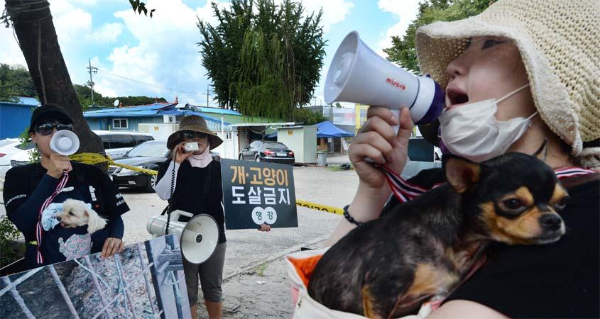 대전지역 '개 식용 반대' 집회…말복에 첨예한 논란