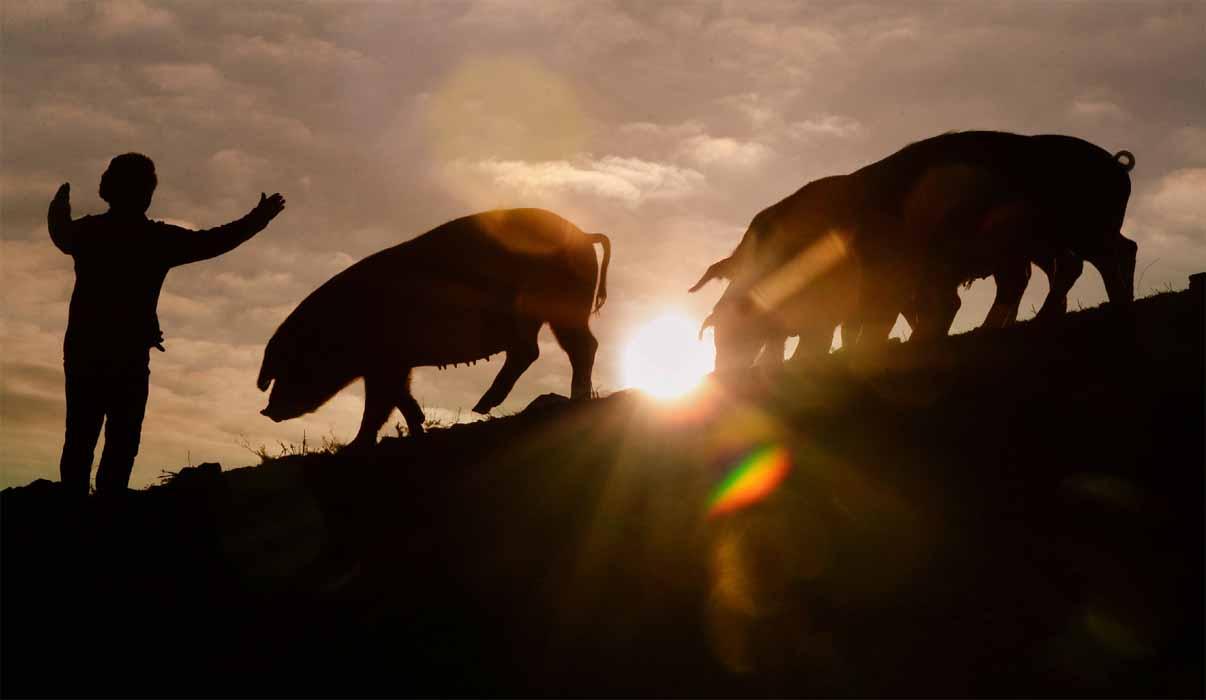 2019년 기해년 돼지의 해가 밝았습니다