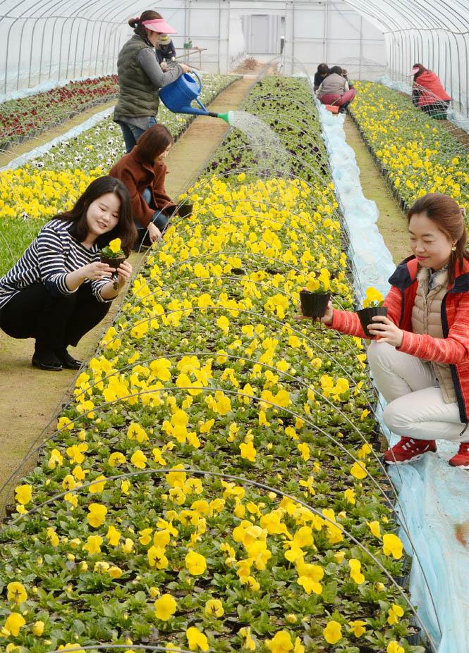 1면-봄꽃2.jpg