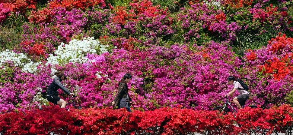 5월… '꽃잔치'