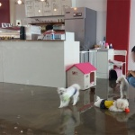 사람과 개·고양이 한 공간서 먹고 마시고 위생 사각지대 동물카페