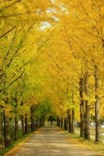 가을이 빚은 문광저수지