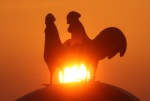 닭도, 닭집도, 닭대가리들 때문에 슬프다