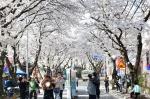 청풍호벚꽃축제, 차질우려 딛고 내달 정상개막