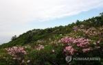 정선 두위봉 철쭉제 27∼28일 열려…힐링 여행