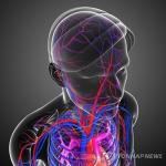 강박성 신경증 치료 신기원 열리나…뇌 염증과 관련 확인