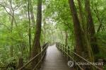 치악산 구룡사 황장목 숲길 걸어보자…걷기 축제