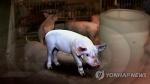 논산 돈사 화재로 돼지 1천570마리 죽어