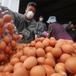 [사진으로 보는 한주의 이슈] 살충제 먹거리 공포 '계란 대란'