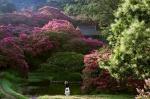 [연합이매진] 배롱나무꽃 사이로 펼쳐진 담양의 무릉도원
