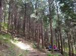 진해 편백숲 걷기+체험 힐링코스로 가꾼다