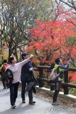 전국 절정 가을빛에 물들어…유명산·축제장 '인산인해'