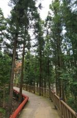 [길따라 멋따라] 가지 않은 숲길…보성 제암산 '명품 숲길'을 거닐다