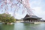 봄꽃놀이 여행지로 한국·대만인은 일본 선호…일본인은 한국