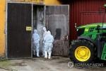 유럽, 100% 죽는 돼지전염병 비상…국경에 천km 넘는 장벽 설치