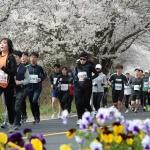 마중나온 형형색색 봄꽃들… 굽이굽이 행복한 마라톤 물결