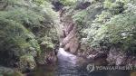 '천 년 숲으로의 시간 여행'…치악산 금강송길 걷기