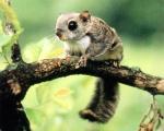 하늘다람쥐 주서식처는 강원 백두대간