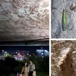대전천 벌레 기승