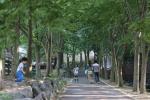자연에서 쉼표…청양군 칠갑산 자연휴양림 인기