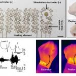 독성 없는 인체 삽입 의료기기 '청신호'