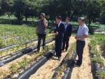 충남농협, 농작물 가뭄피해 현장 챙기기 나서