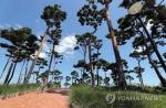 대전·충남 이틀째 열대야 해소…폭염도 주춤