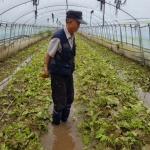 [르포] 1년 농사 하룻밤새 '침수' 대전 폭우에 비닐하우스 전멸