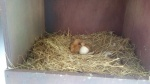 '멸종위기' 양비둘기 2마리 번식 성공