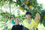초강초 영동과일나라테마공원 현장체험