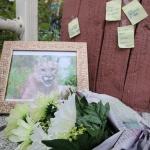 박제냐 소각이냐…죽어서도 '여론'에 갇힌 퓨마