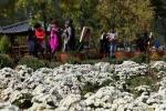 영동 노근리평화공원 가을정원 축제
