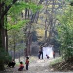 이맘때만 열리는…세종 '비밀의 숲'