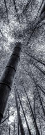 나무, 은하수를 품다