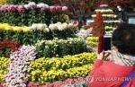 [주말 N 여행] 충청권: 단풍과 국화가 만나면…옛 대통령 별장 청남대의 가을