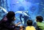 단양강에서 아마존까지…민물고기 박람회