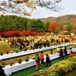 청남대 국화축제 18만 5926명 관람