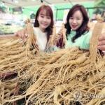 """충남 """"인삼산업 재도약""""…5년간 746억 투입"""
