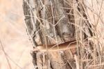 단양 야산 소나무 훼손…그리고 아무도 없었다