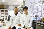 KAIST, 펩타이드-항체 복합체 항암제 기술 개발