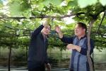 농협 대전지역본부, 포도 재배농가 현장방문