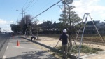 서산시, 도심 가로수 소나무 전정 작업 시행