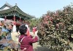 [#꿀잼여행] 충청권: 봄이 왔어요…동백꽃 활짝 주꾸미는 통통