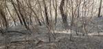 """세종시 야산서 불…""""번개 치더니 산에서 연기"""""""
