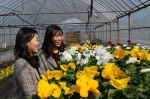 영동군이 피우는 꽃
