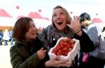올봄도 논산은 딸기 향 '폴폴'… 내일 축제 시작